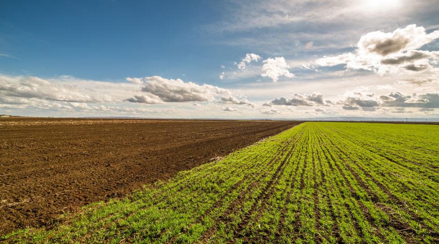 Acta previa a la ocupación de suelo regadío